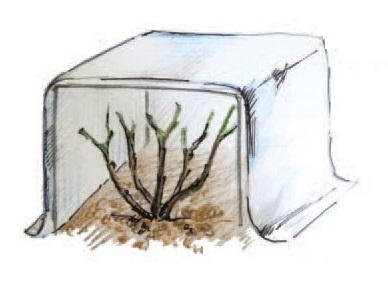 Зимнее укрытие для цветущих кустарников