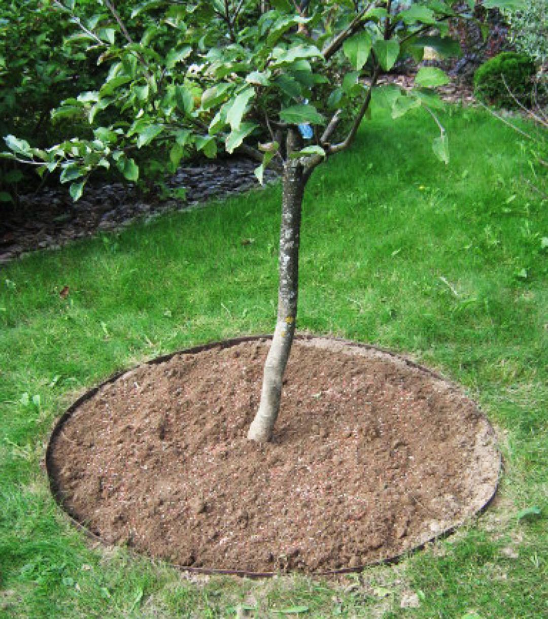 Приствольный круг для растений.