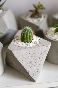 """Горшок с растением """"Notocactus warasii"""""""