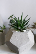 "Горшок с растением ""Haworthia attenuata"""