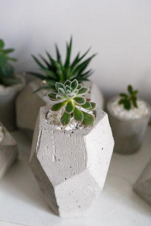 """Горшок с растением """"Echeveria pulvinata Frosty"""""""
